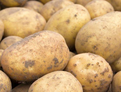 Fontane pootaardappelen gevraagd in handelsgroep 'Pootaardappelen'